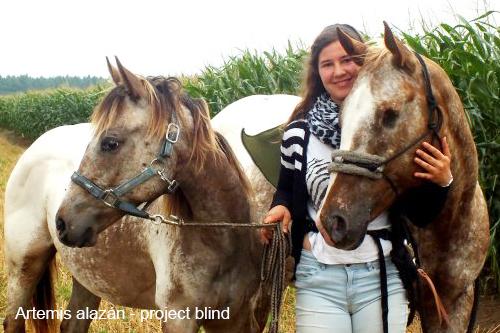 Artemis alazán - project blind