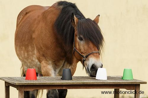 Motionclick.de – Positives Pferdetraining mit Sylvia Czarnecki mit Denksport