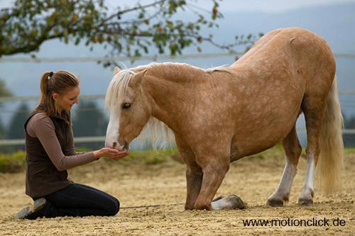 Motionclick.de – Positives Pferdetraining mit Denksport mit Sylvia Czarnecki