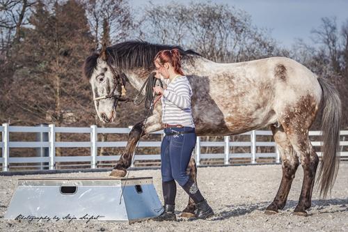 Pferd steigt auf ein Podest für Pferde.