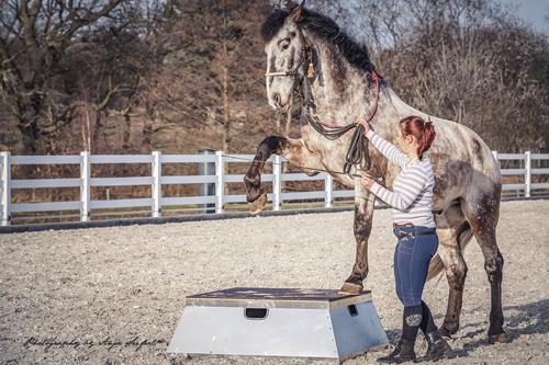 Pferd zeigt den spanischen Gruß auf einem Pferdepodest.