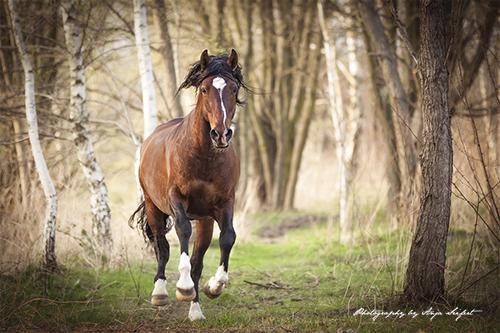 Anja Seifert stellt sich und ihre Pferdefotos auf www.pferde.world vor.