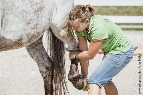 Pferde.world stellt vor: Aileen Ullrich - Pferdephysiotherapie und Osteopathie für Pferde