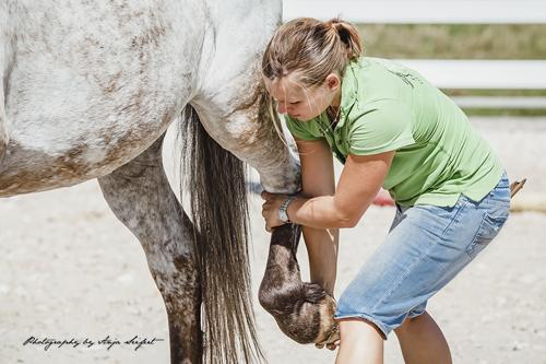 0148_pferde-world-pferdephysiotherapie-aileen-ullrich-physiotherapie-fuer-pferde-phopress-anja-seifert