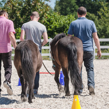 Pferdegestütztes Coaching in Kombination mit Wahrnehmungs-, Präsenz- & Bewusstseinstraining