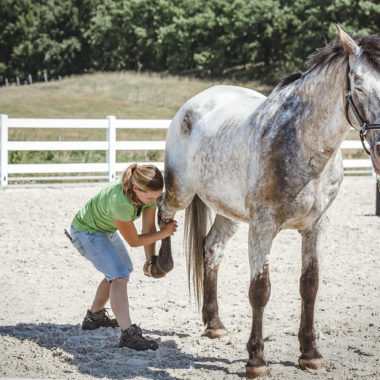 Pferdephysiotherapie und Osteopathie für Pferde Aileen Ullrich