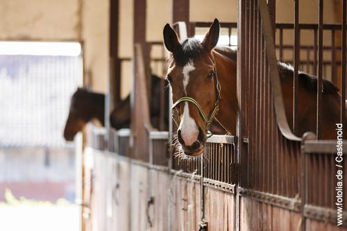 Boxenhaltung. Pferde leben in einer Box im Stall oder in der Reithalle.