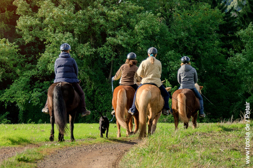 Eine Gruppe Reiter während eines Geländerittes