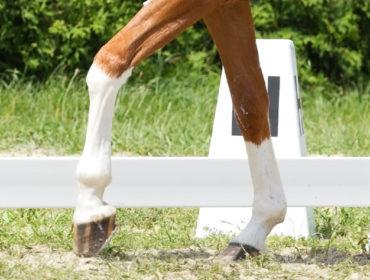 Weißer Fuss oder Stiefel