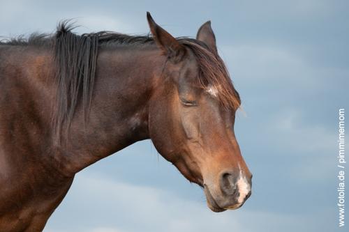Wie schlafen Pferde?