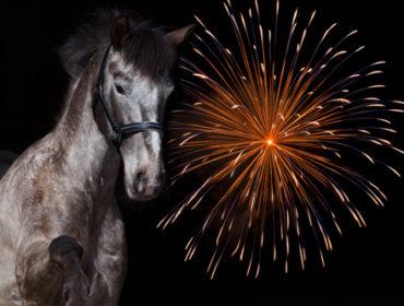 Silvester: So kannst du dein Pferd die Angst nehmen