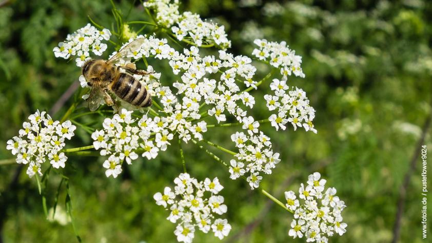 Honig Ziegenkraut Bewertungen