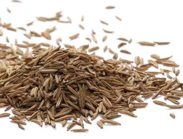Kümmel – Gewürzpflanze seit Jahrtausenden
