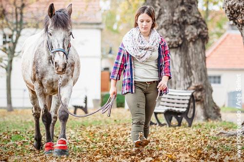 Pferd mit Hufverletzung in der Klinik.