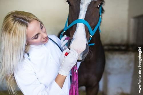 Versicherungen für Pferde, Tierkrankenvollversicherung, OP-Versicherung, Rechtschutzversicherung für Pferde