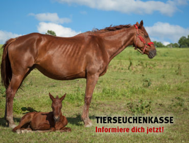 Meldepflicht Tierseuchenkasse!