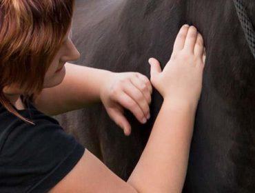 Tierphysiotherapie Lebensgefühl – Michelle Becker