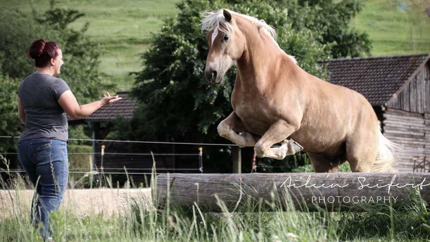 Katrin Seifert mit ihren Pferden auf der Orlatal-Ranch, Natural Horsemanship