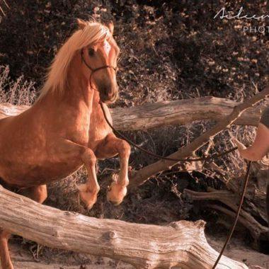 Natural Horsemanship Katrin Seifert