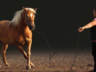 Natural Horsemanship Workshop mit Katrin Seifert in Apolda, 08.04.2018