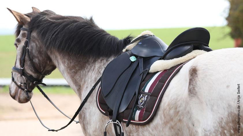 Guardian Horse, Notfalltracker für mehr Sicherheit im Gelände
