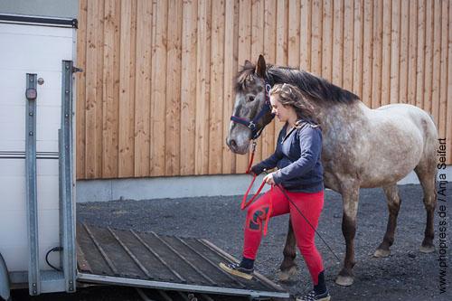 Stressfreies Verladetraining mit einem Pferd.
