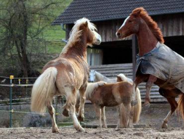 Pensionsplatz auf der Orlatal-Ranch frei