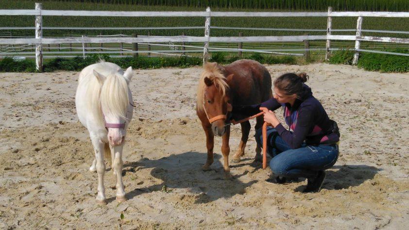Mobile Pferdeheilpraxis Stephanie Schilder