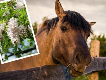 3 Pflanzen die deinem Pferd schaden können