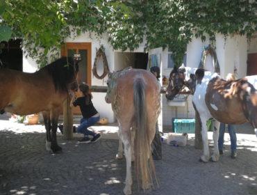 4 Tage Feriencamp – Pferdeflüstern und Natur erleben