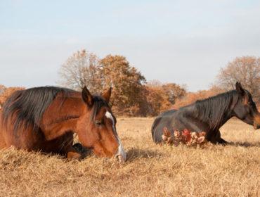 Reiterhof setzt 66 Pferde vor die Tür