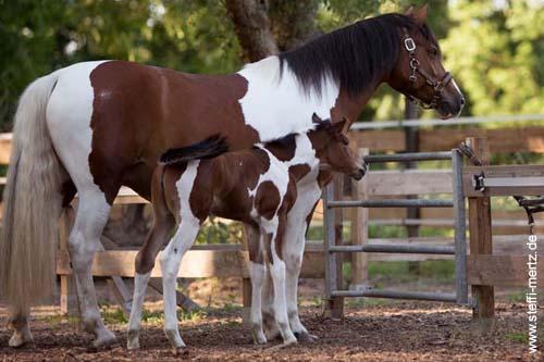 Pferdenamen für Hengst und Stue