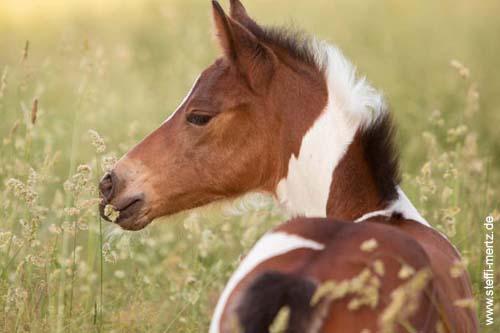 Pferdenamen für Hengst und Stute