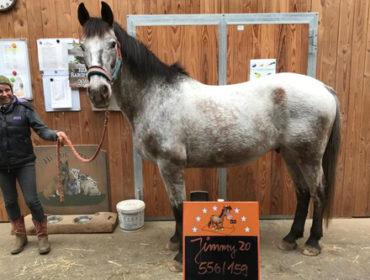 Pferde wiegen – Wieso, Weshalb, Warum?