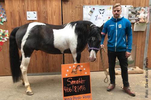 Pferdewaage zur Gewichtskontrolle der Pferde