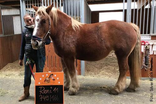 Regelmäßige Gewichtskontrolle durch die Pferdewaage.
