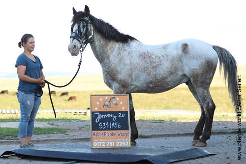 Mobile Pferdewaage bei Jimmy im Juni