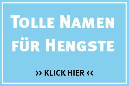 Namen für Hengste - Pferdenamen