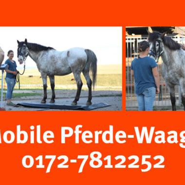 001-mobile-pferdewaage-sachsen-thueringen-3