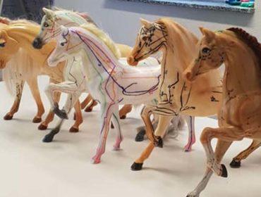 Pferdeheilpraktikerin Sabine Leupold