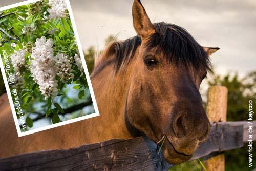 000116-3-giftpflanzen-fuer-pferde-lupine-robinie-fingerhut-2