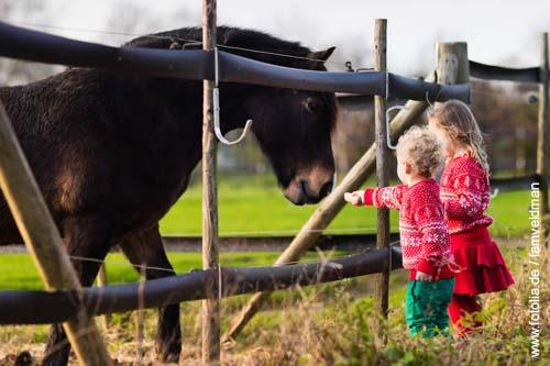 Fremdfüttern von Pferden ist verboten