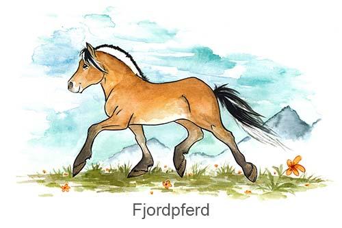 Produkte für Fjordpferde