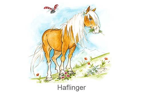 Produkte für Haflinger