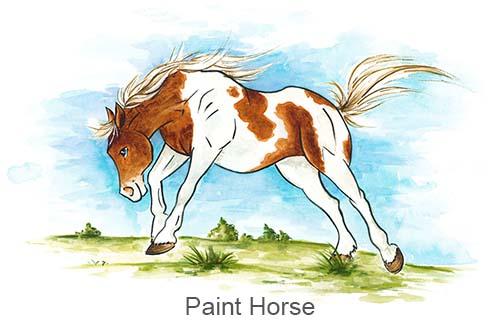 Produkte für Paint Horse