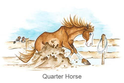 Produkte für Quarter Horse