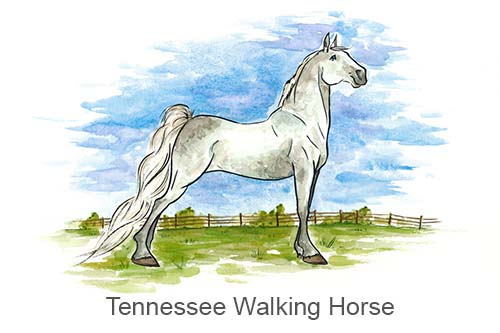 Produkte für Tennessee Walking Horse