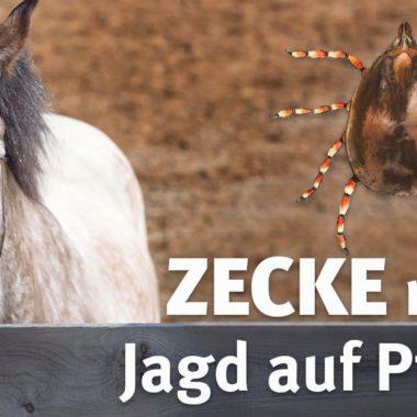 0001-hyalomma-zecke-pferd