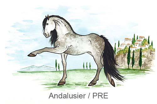 Produkte für Andalusier und PRE