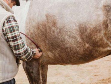 Herpes bei Pferden